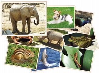 Fotoset dieren