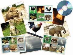 Geluiden(lotto) Dieren & natuur