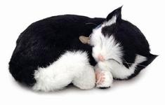 Perfecte kat Stoffel